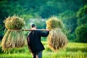 Giã từ nông dân: Không chỉ là nỗi buồn của cá nhân