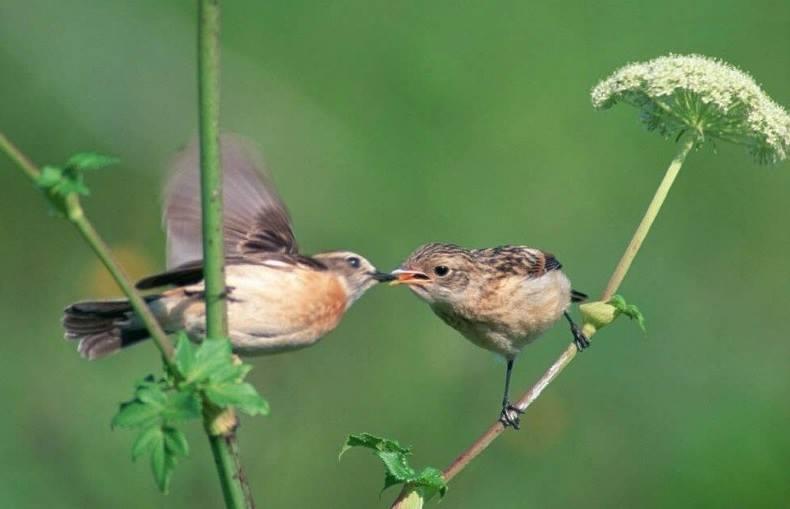 Chùm truyện về tình yêu và mùa xuân của cây bút Bùi Việt Phương