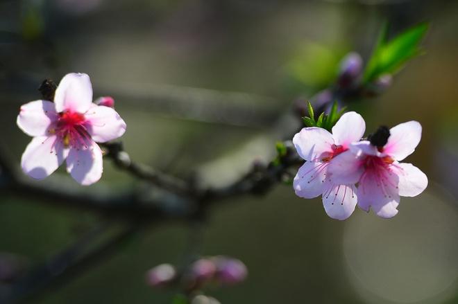 Mùa xuân và tình yêu trong hai truyện ngắn