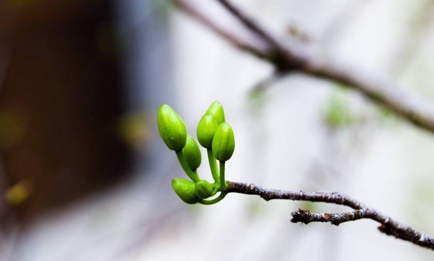 Xuân trong thơ Nôm
