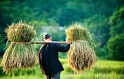 """Văn học đề tài nông thôn: Liệu có bị """"bỏ quên""""?"""
