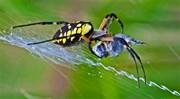 Số phận của gã ruồi ong