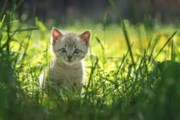 Mèo con không biết vâng lời
