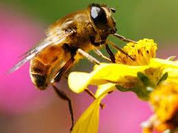 Chú ong thợ can đảm trong truyện