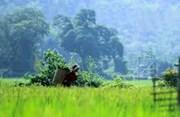 Tráng A Khành: Thân phận người phụ nữ vùng cao