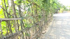 """""""Bức tường rào"""": Bức tường ngăn cách tình cảm anh em"""