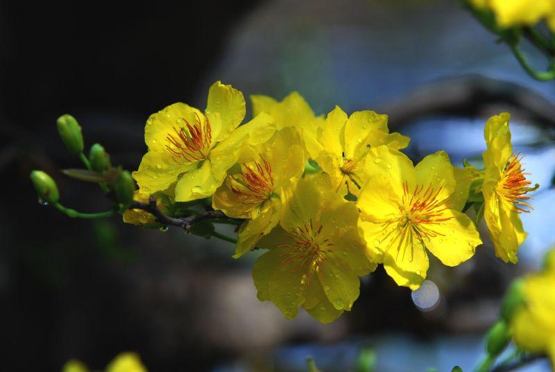 Thơ với mùa xuân tha phương