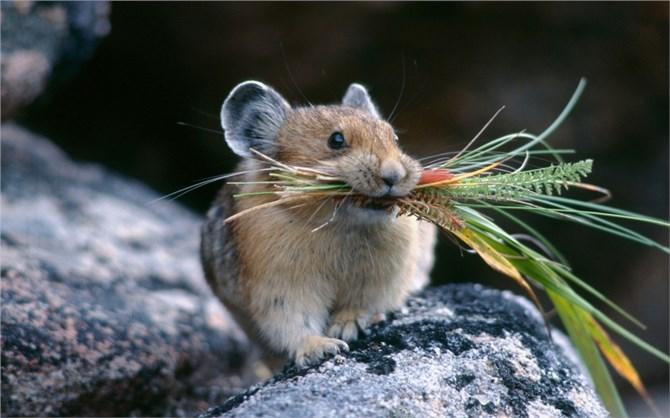 Thực hư chỉ tại con chuột